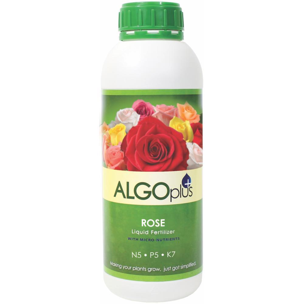 AlgoPlus Rose