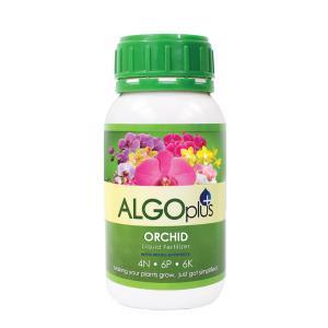 AlgoPlus Orchids