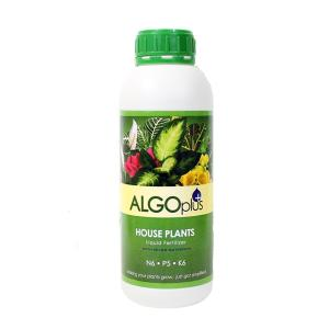 AlgoPlus House Plants